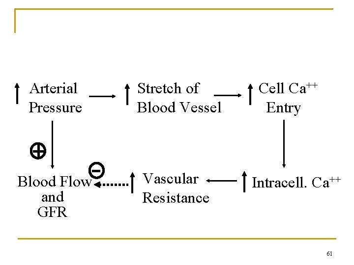 Myogenic Mechanism Arterial Pressure Stretch of Blood Vessel Blood Flow and GFR Vascular Resistance