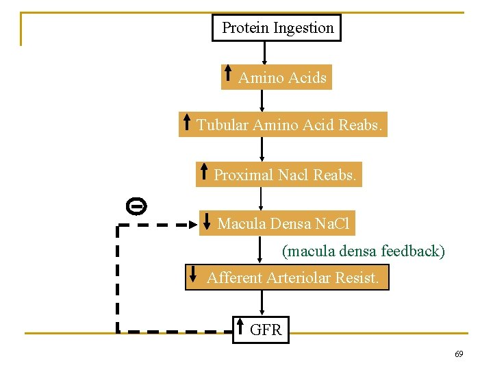 Protein Ingestion Amino Acids Tubular Amino Acid Reabs. Proximal Nacl Reabs. Macula Densa Na.