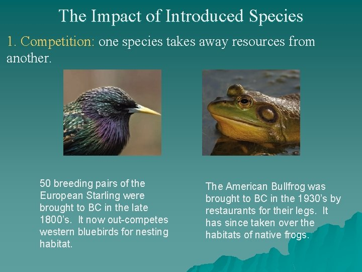 The Impact of Introduced Species 1. Competition: one species takes away resources from another.
