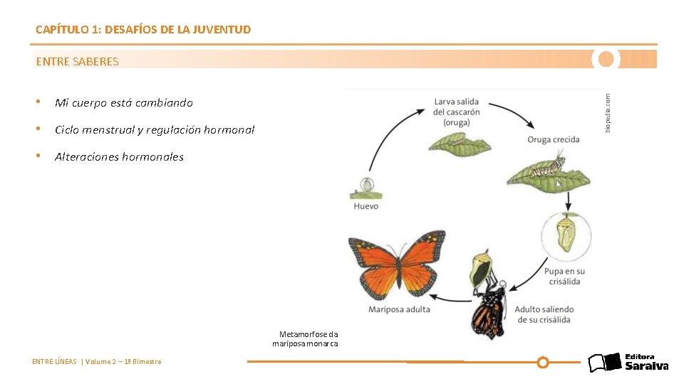 CAPÍTULO 1: DESAFÍOS DE LA JUVENTUD biopedia. com ENTRE SABERES • Mi cuerpo está