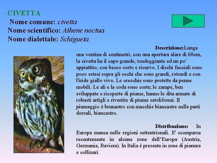CIVETTA Nome comune: civetta Nome scientifico: Athene noctua Nome dialettale: Schigueta Descrizione: Lunga una