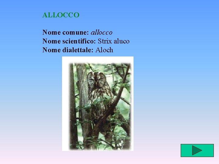 ALLOCCO Nome comune: allocco Nome scientifico: Strix aluco Nome dialettale: Aloch