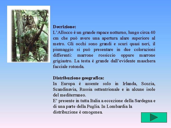 Decrizione: L'Allocco è un grande rapace notturno, lungo circa 40 cm che può avere