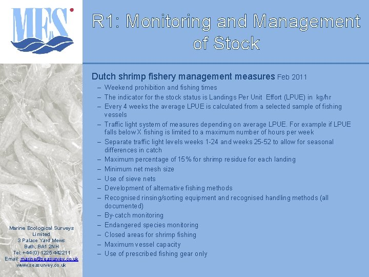 R 1: Monitoring and Management of Stock Dutch shrimp fishery management measures Feb 2011