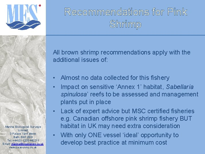 Recommendations for Pink Shrimp All brown shrimp recommendations apply with the additional issues of: