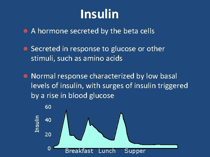 Insulin l A hormone secreted by the beta cells l Secreted in response to