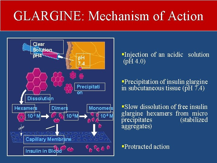 GLARGINE: Mechanism of Action Clear Solution p. H 4 §Injection of an acidic solution
