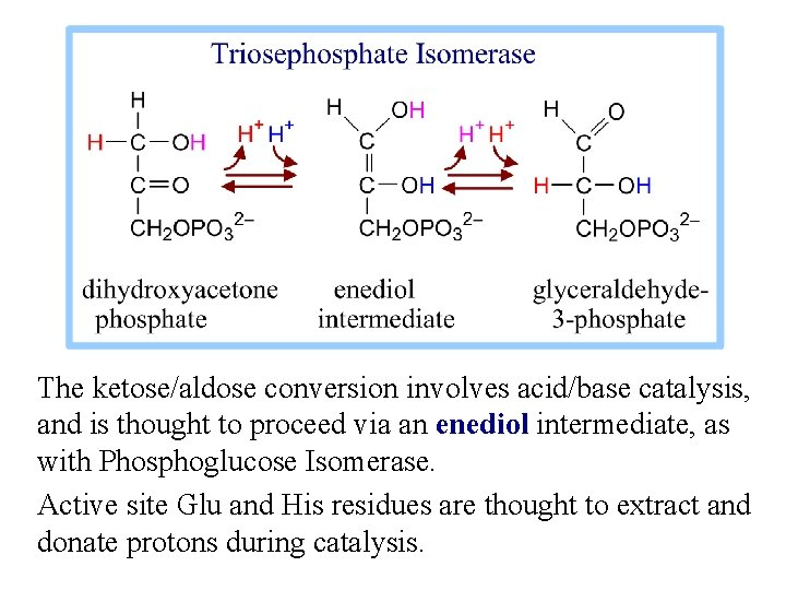 The ketose/aldose conversion involves acid/base catalysis, and is thought to proceed via an enediol