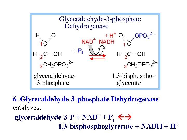 6. Glyceraldehyde-3 -phosphate Dehydrogenase catalyzes: glyceraldehyde-3 -P + NAD+ + Pi 1, 3 -bisphoglycerate