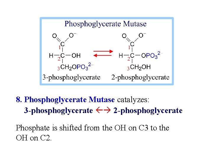 8. Phosphoglycerate Mutase catalyzes: 3 -phosphoglycerate 2 -phosphoglycerate Phosphate is shifted from the OH