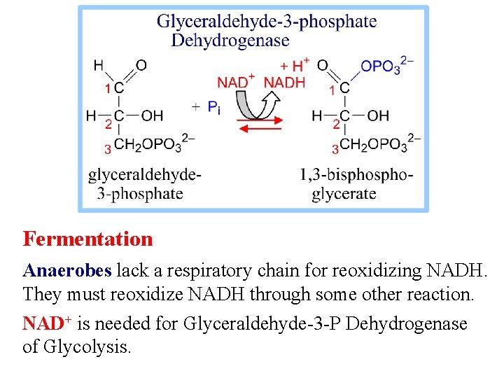 Fermentation Anaerobes lack a respiratory chain for reoxidizing NADH. They must reoxidize NADH through