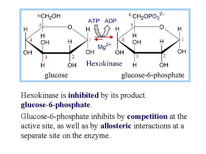 Hexokinase is inhibited by its product glucose-6 -phosphate. Glucose-6 -phosphate inhibits by competition at