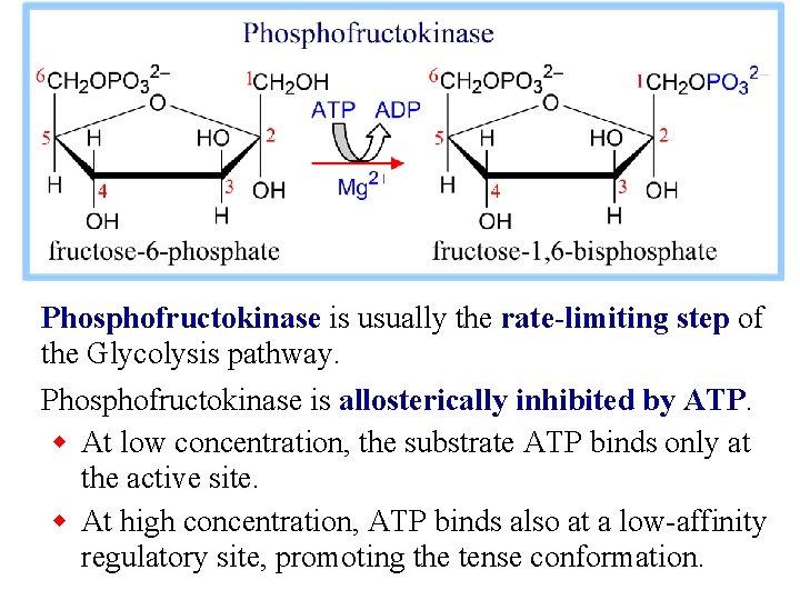 Phosphofructokinase is usually the rate-limiting step of the Glycolysis pathway. Phosphofructokinase is allosterically inhibited