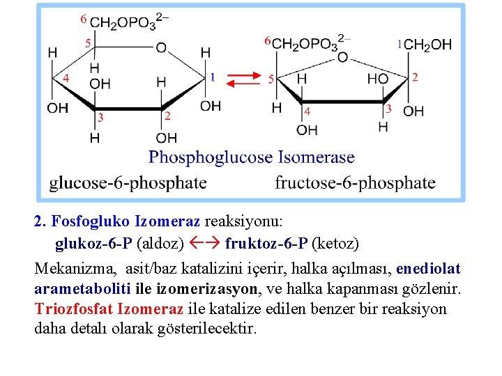 2. Fosfogluko Izomeraz reaksiyonu: glukoz-6 -P (aldoz) fruktoz-6 -P (ketoz) Mekanizma, asit/baz katalizini içerir,