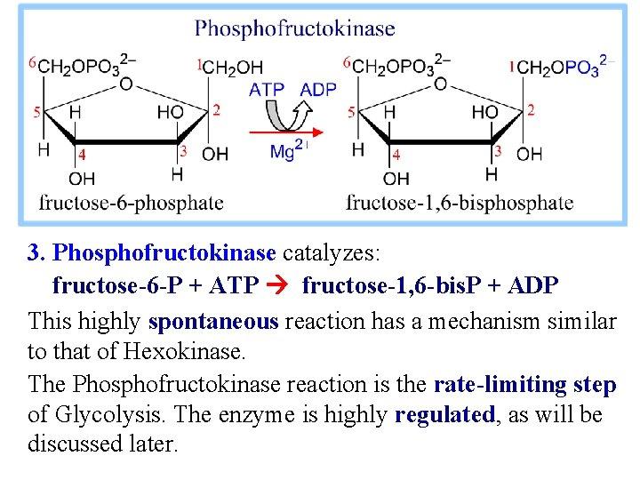 3. Phosphofructokinase catalyzes: fructose-6 -P + ATP fructose-1, 6 -bis. P + ADP This