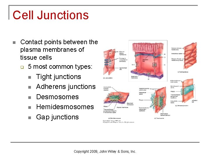 Cell Junctions n Contact points between the plasma membranes of tissue cells q 5