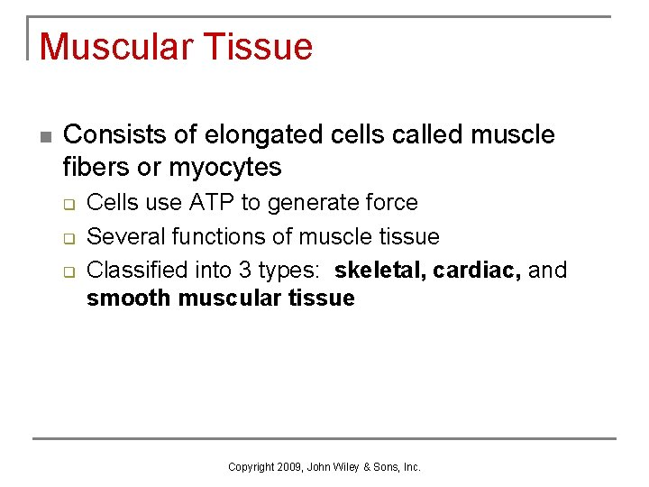 Muscular Tissue n Consists of elongated cells called muscle fibers or myocytes q q
