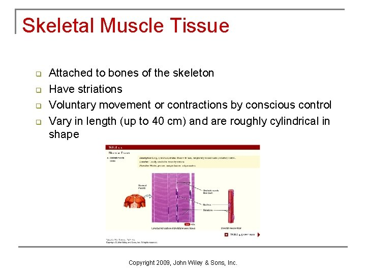 Skeletal Muscle Tissue q q Attached to bones of the skeleton Have striations Voluntary
