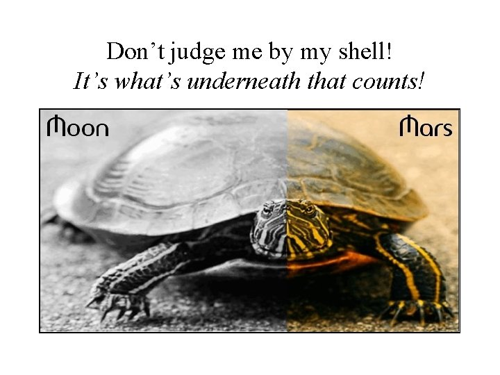 Don't judge me by my shell! It's what's underneath that counts!