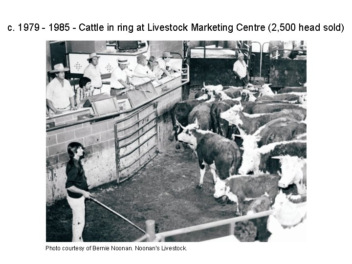 c. 1979 - 1985 - Cattle in ring at Livestock Marketing Centre (2, 500