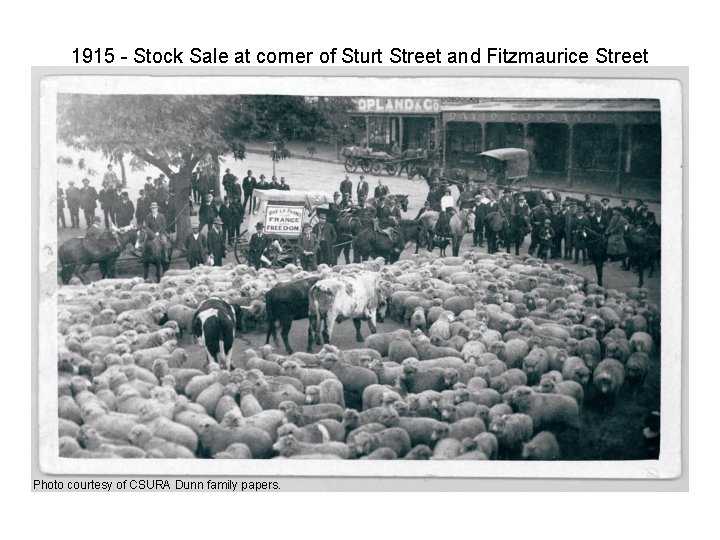 1915 - Stock Sale at corner of Sturt Street and Fitzmaurice Street Photo courtesy