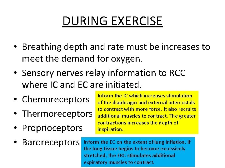 DURING EXERCISE • Breathing depth and rate must be increases to meet the demand