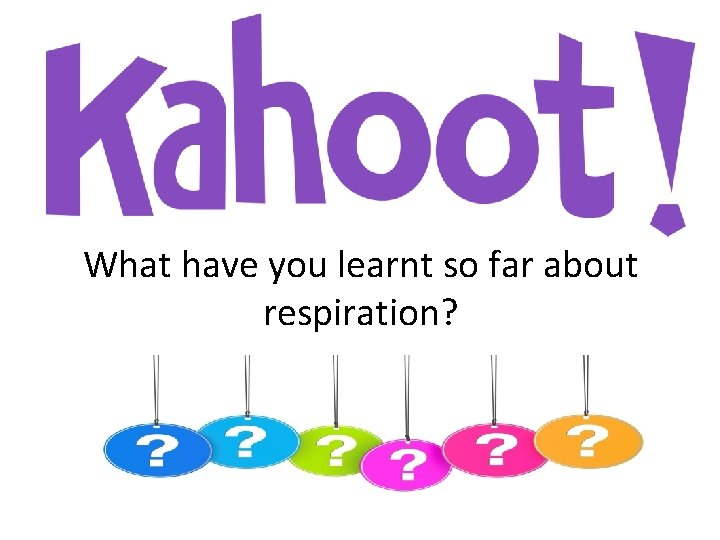 What have you learnt so far about respiration?