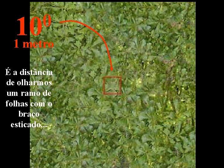 0 10 1 metro É a distância de olharmos um ramo de folhas com