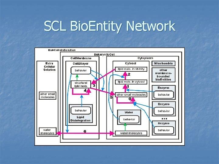 SCL Bio. Entity Network