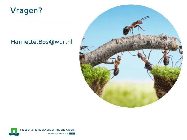 Vragen? Harriette. Bos@wur. nl