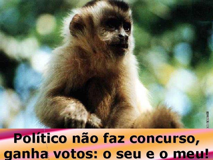 Político não faz concurso, ganha votos: o seu e o meu!