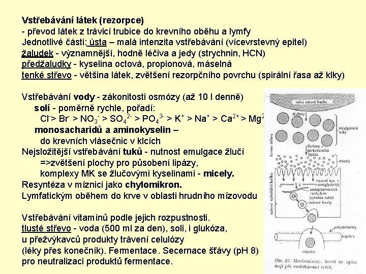 Vstřebávání látek (rezorpce) - převod látek z trávicí trubice do krevního oběhu a lymfy