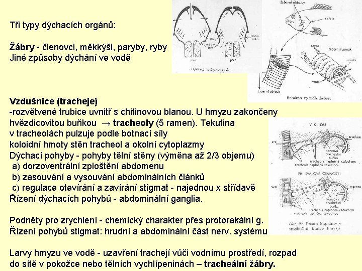 Tři typy dýchacích orgánů: Žábry - členovci, měkkýši, paryby, ryby Jiné způsoby dýchání ve