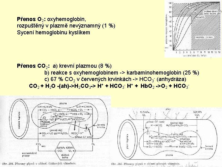 Přenos O 2: oxyhemoglobin, rozpuštěný v plazmě nevýznamný (1 %) Sycení hemoglobinu kyslíkem Přenos