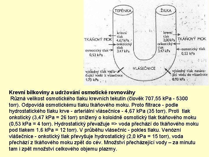 Krevní bílkoviny a udržování osmotické rovnováhy Různá velikost osmotického tlaku krevních tekutin (člověk 707,