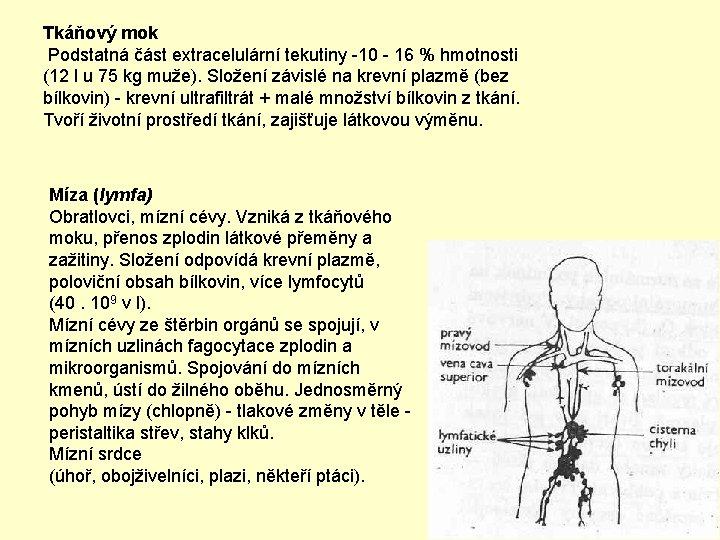 Tkáňový mok Podstatná část extracelulární tekutiny -10 - 16 % hmotnosti (12 l u