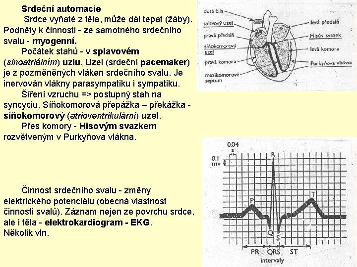 Srdeční automacie Srdce vyňaté z těla, může dál tepat (žáby). Podněty k činnosti -