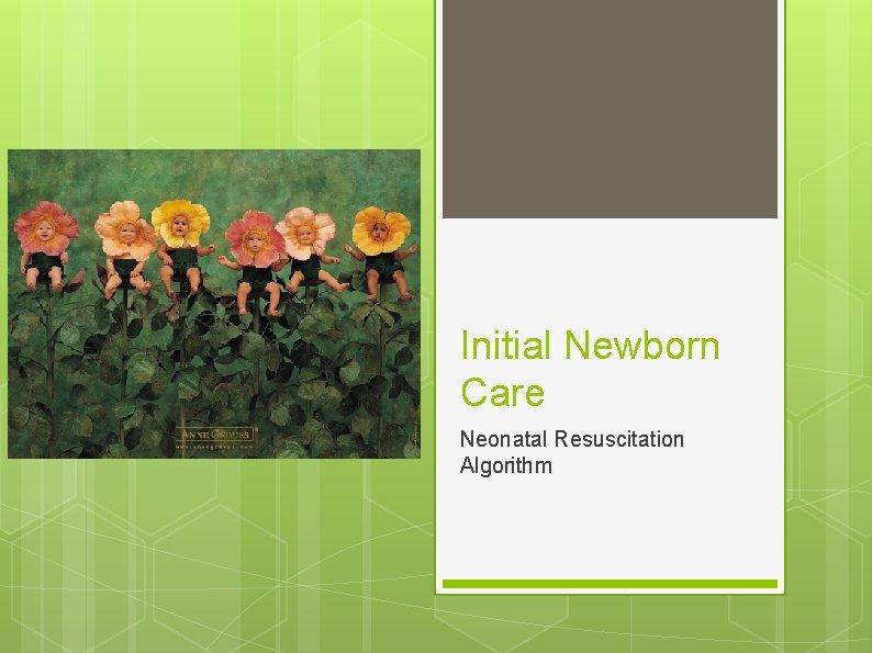 Initial Newborn Care Neonatal Resuscitation Algorithm