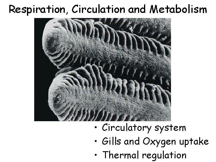 Respiration, Circulation and Metabolism • Circulatory system • Gills and Oxygen uptake • Thermal