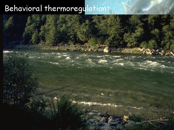 Behavioral thermoregulation