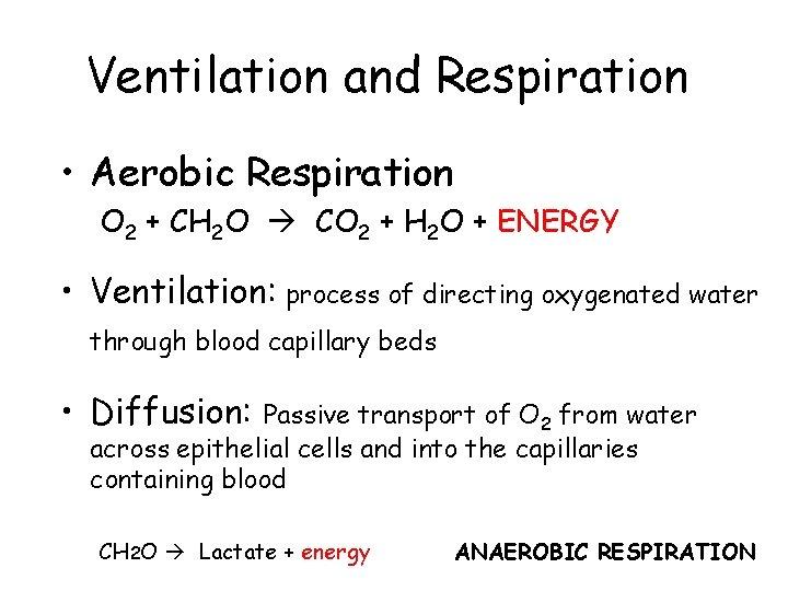 Ventilation and Respiration • Aerobic Respiration O 2 + CH 2 O CO 2