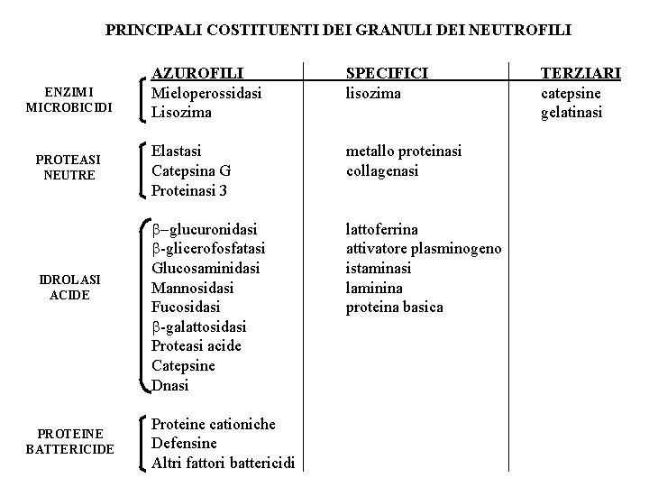 PRINCIPALI COSTITUENTI DEI GRANULI DEI NEUTROFILI ENZIMI MICROBICIDI PROTEASI NEUTRE IDROLASI ACIDE PROTEINE BATTERICIDE