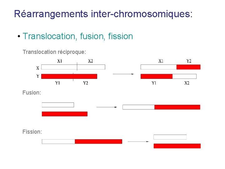 Réarrangements inter-chromosomiques: • Translocation, fusion, fission Translocation réciproque: Fusion: Fission: