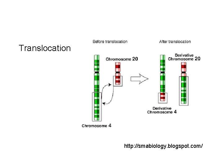 Translocation http: //smabiology. blogspot. com/