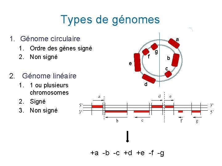 Types de génomes 1. Génome circulaire a 1. Ordre des gènes signé 2. Non