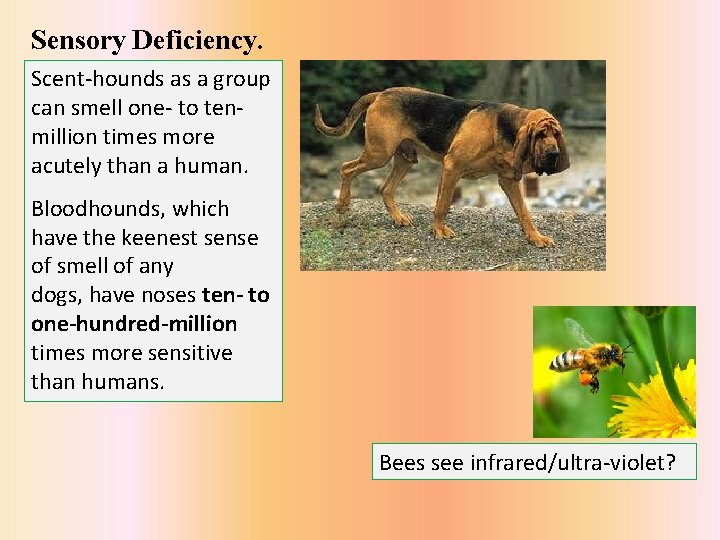 Sensory Deficiency. Scent-hounds as a group can smell one- to tenmillion times more acutely