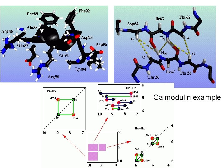 Calmodulin example