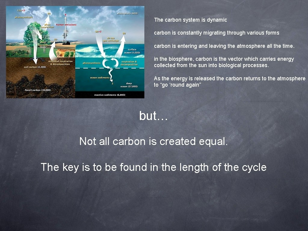 The carbon system is dynamic carbon is constantly migrating through various forms carbon is