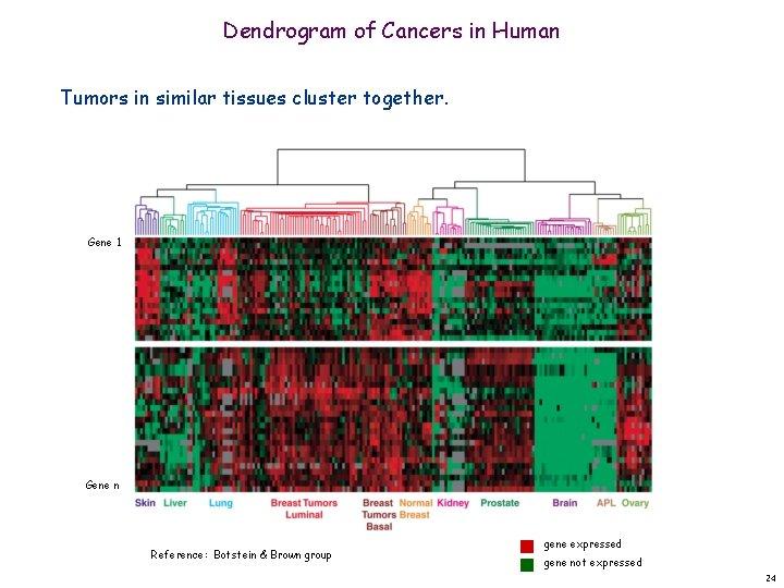 Dendrogram of Cancers in Human Tumors in similar tissues cluster together. Gene 1 Gene