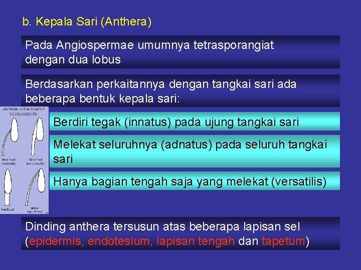 b. Kepala Sari (Anthera) Pada Angiospermae umumnya tetrasporangiat dengan dua lobus Berdasarkan perkaitannya dengan